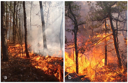 Figure 1.   (a) A low intensity surface fire; and (b) a high intensity fire starting to transition to the forest canopy in the Pinelands National Reserve, New Jersey. Figure 2.   One of the towers used to quantify turbulence and heat fluxes from wildland fires in the Pinelands National Reserve, New Jersey.
