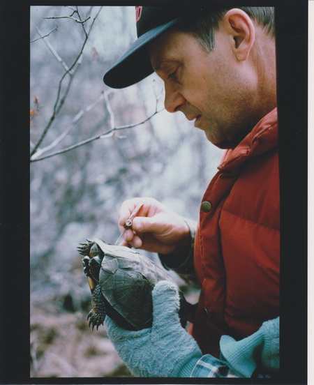 Photo of Image1 Forest Service Research Wildlife Biologist Richard Buech (retired), counts annual growth rings on the carapace (upper shell) of an adult wood turtle in northeastern Minnesota during the original study, 1990. Mark Nelson, USDA Forest Service Image Donald Brown (right), West Virginia University, examines the carapace (upper shell) of an adult wood turtle in northeastern Minnesota while University of Minnesota-Duluth graduate student Madaline Cochrane (left) and Northern Michigan University student intern Stefan Nelson (center) view the plastron (lower shell) and record data during the 2015 study.