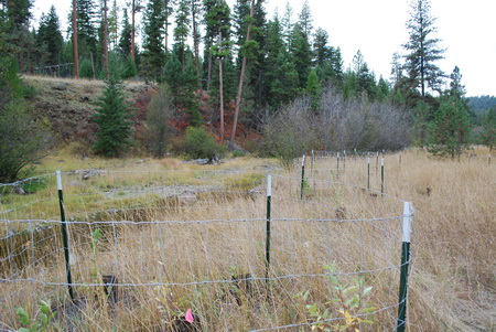 Photo of Exclosures protect riparian plantings from browsing by deer and elk at Starkey Experimental Forest and Range, Oregon.