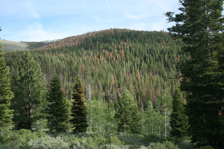 Photo of Fremont-Winema National Forest.