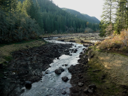Photo of Trout Creek, Washington, two years after  the removal of Hemlock Dam.