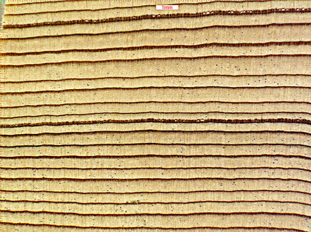 "Photo of Douglas-fir wood at 57X magnification. Chemical analysis shows that Douglas-fir wood from different geographic regions has distinct chemical ""fingerprints,"" which can be used to identify the geographic origin of the wood."