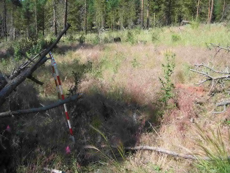 Photo of A cheatgrass invasion after burning in a ponderosa pine-bunch grass plant community on the Malheur National Forest in Oregon. Study plots are monitored through time to examine the long-term response of cheatgrass to different season and intervals of prescribed burning.