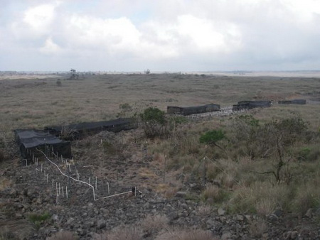 Photo of The greenstrip experiment within a highly flammable grassland environment surrounding an ecosystem fragment on Hawaii Island.