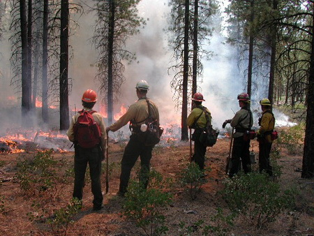 Photo of Prescribed burning in central Oregon ponderosa pine research plots.