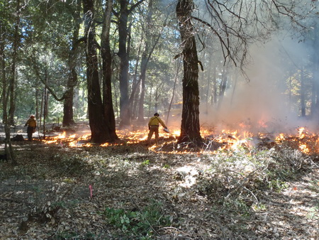 Photo of Klamath River TREX 2015 [Oct. 10, 2015]. Karuk and Yurok ignitors prescribe burning in the Wildland-Urban Interface (Lake property, near Orleans, CA) to reinstate traditional burning in a modern context for fuels reductions, acorn research, and tribal food gathering enhancement.