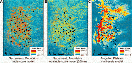 Photo of Mexican spotted owl (MSO) nesting and roosting habitat suitability in the Sacramento Mountains predicted by (A) the multi-scale model, (B) the top single-scale model (200-m radius), and (C) the Mogollon Plateau multi-scale model. Black markers represent MSO locations from the entire validation dataset.