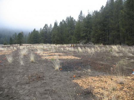 Photo of Soil amendment treatments (wood chips, biochar, and biosolids) alone or in combinations applied to an abandoned mine site near Sumpter, OR.