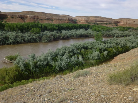 Photo of The mixture of native and nonnative woody vegetation along the San Juan River has greater structural diversity than the adjacent plant community.