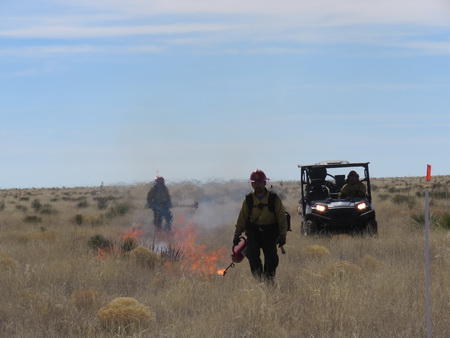 A firefighter is in the process of lighting a prescribed fire with a drip torch as a utility task vehicle follows behind.