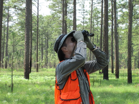 Photo of Dale Brockway collecting longleaf pine cone data.