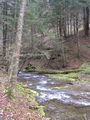 Photo of High-quality stream on Tioga State Forest, Penn., located in the headwaters of the Chesapeake Bay.  Decline of eastern hemlock from hemlock woolly adelgid infestations, may affect the hydrology of the local watershed.