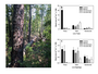 Figure 1. (a) Dead and down pitch pines killed by southern pine beetle in the Pinelands National Reserve of New Jersey, and basal area of (b) live trees and (c) live saplings separated into pines (Pinus rigida, P. echinata, P. virginiana), oaks (Quercus alba, Q. prinus, Q. marlandica, Q. velutina, Q. stellata, Q. falcata, Q. bicolor), and other hardwoods (Acer rubra, Nyssa sylvatica, Carya glabra, Magnolia virginiana, Sassifrass albicaulis) in control, natural, and treated plots.