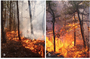 Photo of Figure 1.   (a) A low intensity surface fire; and (b) a high intensity fire starting to transition to the forest canopy in the Pinelands National Reserve, New Jersey. Figure 2.   One of the towers used to quantify turbulence and heat fluxes from wildland fires in the Pinelands National Reserve, New Jersey.