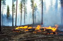 Photo of Forest Service researchers conducted experiments at Pringle Falls Experimental Forest, Oregon, to learn how soil is affected by burn severity, and how that relates to the recovery of vegetation.