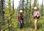 Photo of Field crew collect forest inventory data in a stand of black spruce in Interior Alaska.