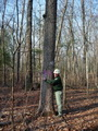 Photo of Daniel Crockett, former employee on the London Ranger District, stands next to a 200 year-old white oak tree that was left following an oak woodland restoration treatment.
