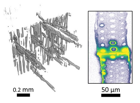 Photo of (left) X-ray computed tomography (XCT) volume reconstructions of BrPF resins in bondlines. (right) X-ray fluorescence microscopy (XFM) Br maps of transverse sections cut from BrPF bondlines.