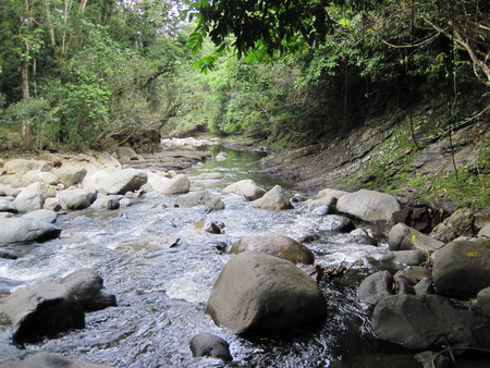 Photo of A view of the Mameyes River, a Wild and Scenic River in the Luquillo Experimental Forest/ El Yunque National Forest, Puerto Rico