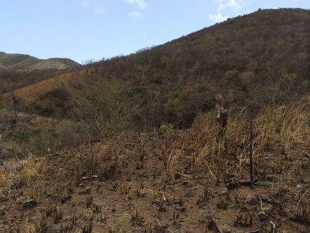 Photo of Fire prone dry forest and grassland ecosystems may expand in area as climate is projected to become warmer and drier