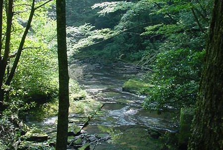 Photo of Water in a stream on the Fernow Experimental Forest.