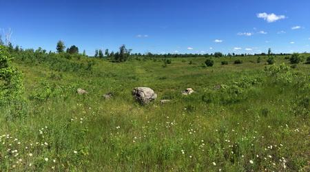 Photo of Moquah Barrens, a restored pine barrens ecosystem in Northwest Wisconsin