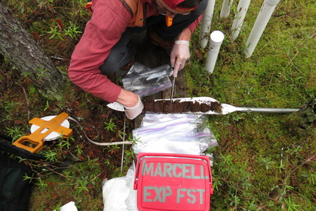 Photo of 2015.04.12_S2N.Lagg_Woerndle_SDS_IMG5774.JPG: Research partner Glenn Woerndle (Univ. of NC, Greensboro) sampling peatland waters for mercury. 
