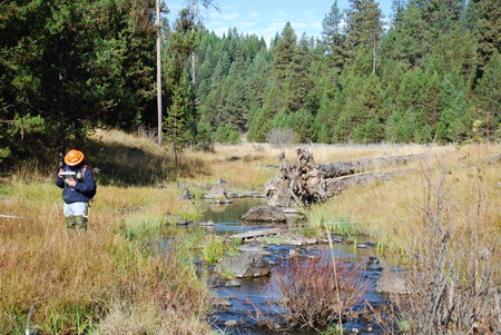 Photo of A field technician collects vegetation data along Meadow Creek in the Starkey Experimental Forest and Range.