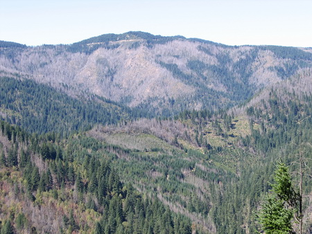 The 2002 Biscuit Fire in the Siskiyou National Forest created a mosiac of burned and unburned forest.