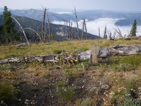 Photo of Dead whitebark pine trees in the Frank Church-River of No Return Wilderness Area, Salmon-Challis National Forest, Idaho