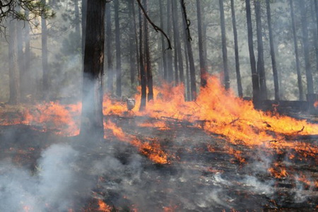 Photo of A fire burns through the understory.