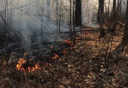 Photo of Tennessee State Forester David Arnold and SRS Research Forester Callie Schweitzer challenged foresters and wildlife managers to think about how and why prescribed fire is used in upland hardwood forests.
