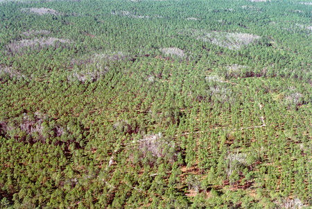 Photo of Cypress swamps embedded in pine flatwoods were among the forested wetland study sites.