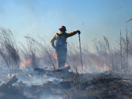 Photo of A prescribed fire burns in a southern forest.