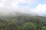 Photo of The cloud-immersed forest of the Luquillo Mountains in eastern Puerto Rico