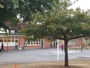 Photo of Schoolyard trees around an elementary school in Portland, Oregon.