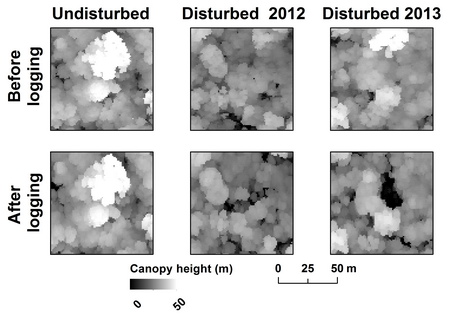 Photo of Top down views of tropical forest canopies from airborne laser scanning (higher features are brighter). The top row of images shows data acquired in 2012; the bottom row shows data acquired in 2014. In the two pairs on the right, logging removed one or more canopies. The bright white crown in the upper right-hand corner is from a tree that was harvested and fell into the middle of the image leaving a deep gap in the canopy.