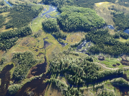Photo of Aerial view of the coastal temperate rainforest in southeastern Alaska.