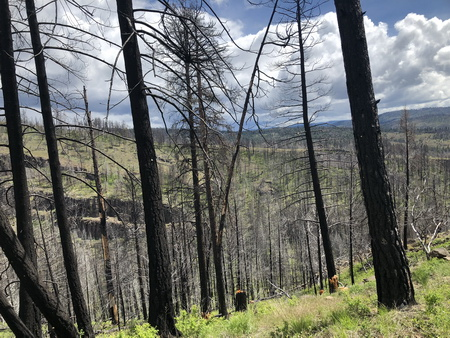 Disturbed forests, such as those that recently experienced wildfire, are the preferred habitat for a number of woodpecker species. These dead and dying trees also have economic value when salvage logged.