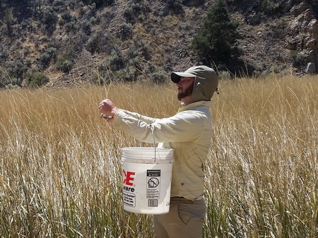 Photo of Researchers with the Great Basin Native Plant Project studying plant seeds in the field.