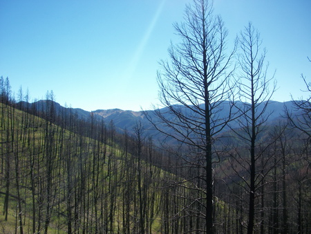 Treated hillslopes following the Little Bear Fire on the Lincoln National Forest, New Mexico.