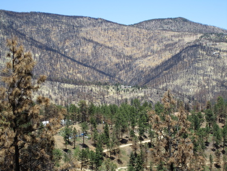 Photo of Vegetation recovery is often slow after high-severity fires.