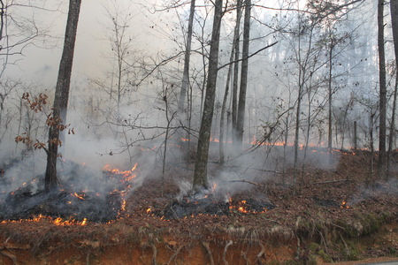 Photo of Prescribed fire is used by national forests, likethe Oconee National Forest in Georgia, to improve wildlife habitat and reduce hazardous fuel loads.