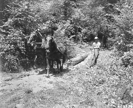 Photo of Horse logging was once common in the southern Appalachians.