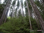 Photo of Oregon forest west of the Cascade Range.