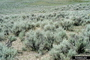 Photo of Western plain covered with sagebrush.