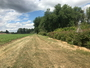 Photo of A windbreak of trees and shrubs designed to protect and enhance production of annual crops, while also protecting soil quality and providing habitat for pollinators in Corvallis, Oregon.