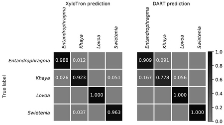 Photo of Side-by-side comparison of XyloTron and DART mass spectrometry identification results at the genus level. Diagonal values are correct predictions; values in the cells are the proportion of the total number of specimens correctly identified.