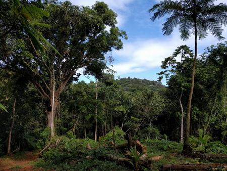 Photo of Organic cacao farm in Aguada, Puerto Rico.