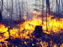 One of the spring prescribed fires conducted on the Allegheny National Forest to test the feasibility of the shelterwood – burn technique for regenerating mixed-oak forests. The burn was conducted in early May 2005. Note the flame lengths (stump is 18 inches tall) and the degree of leaf expansion by the understory trees. Photo by Patrick Brose.